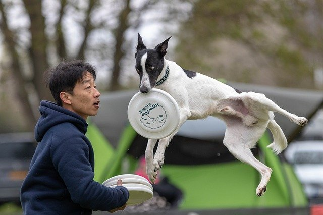 zábava s dogfrisbee